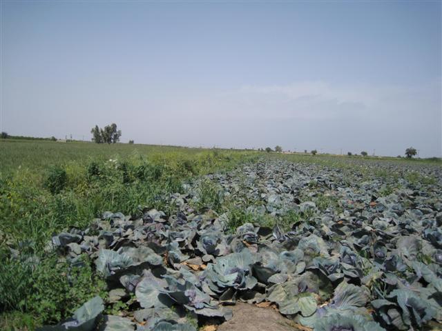 عکس طبیعت دزفول